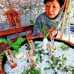 A woman visiting the Mukojima-Hyakkaen Gardens in Sumida, Tokyo, on Wednesday, December 25, looks at the seven herbs planted together in a large bamboo basket.