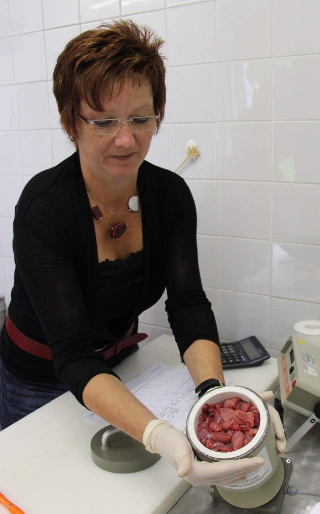 A staffer of Bayerische Staatsforsten's inspection center in Munich, Bavaria, checks the level of radioactive cesium in game meat, which takes only about five minutes.