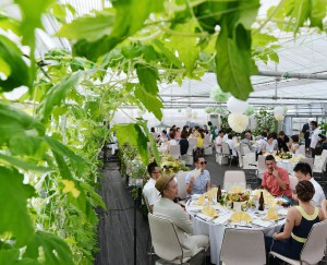 Wedding took place in vinyl greenhouse where green bitter gourd plants are grown to create leaf curtains.