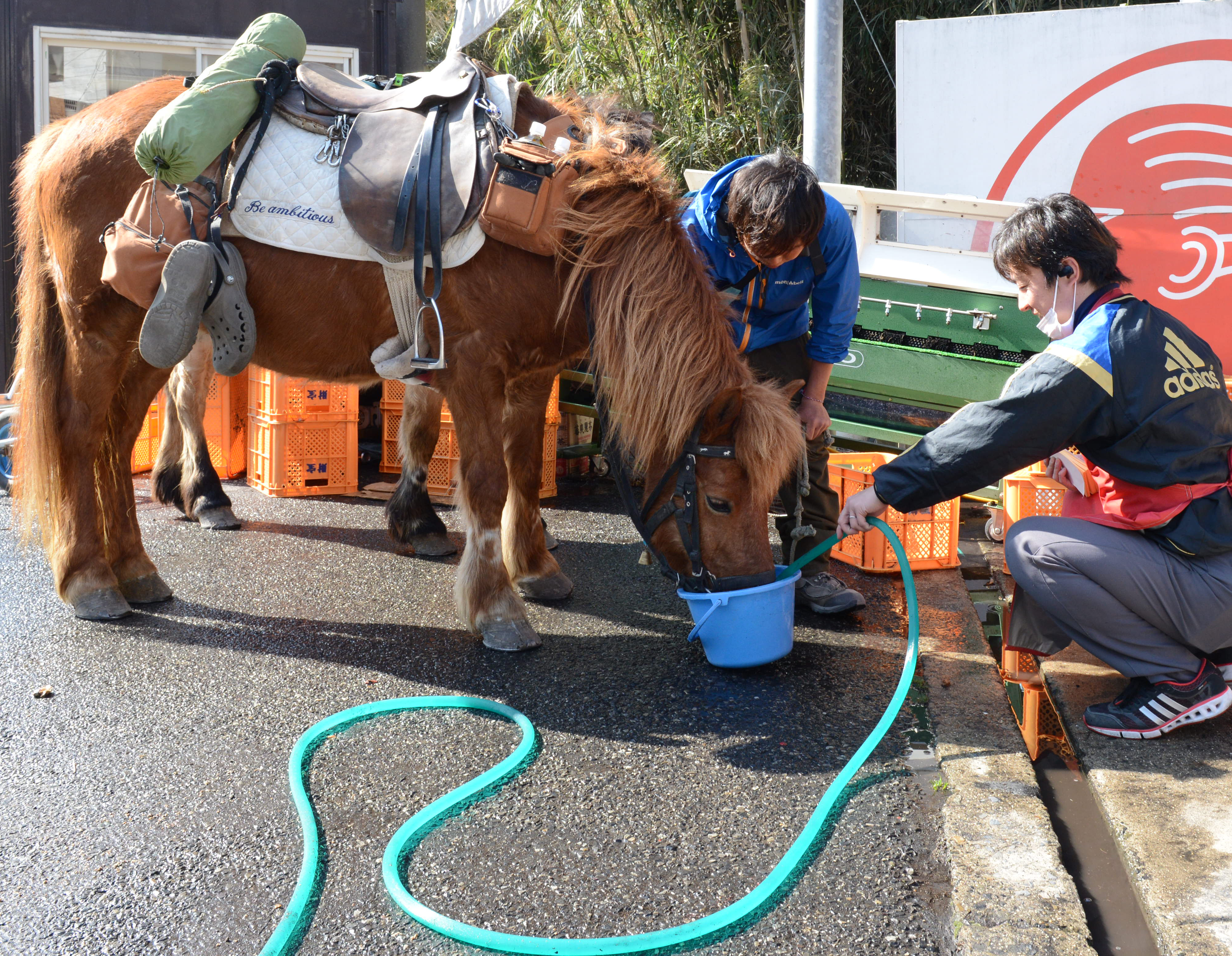 Feeding water (not petrol!) at gas station. Horses emptied the buckets in a few seconds