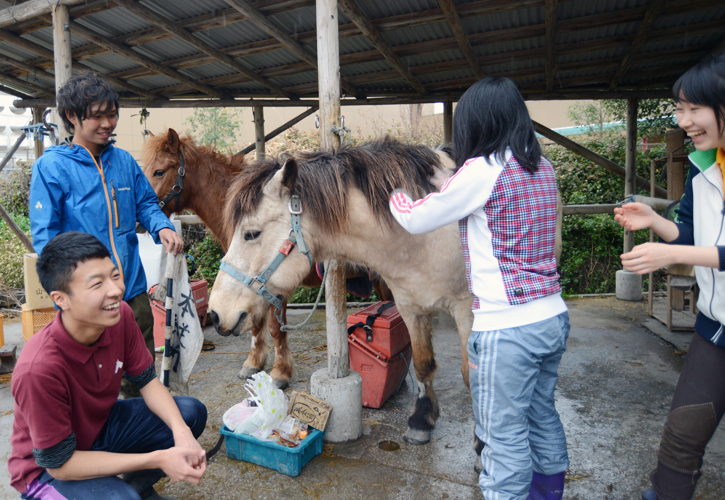 Making friends with members of equestrian club of Kagoshima University