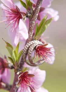 Wedding rings on peach flowers