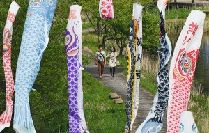Visitors can also stroll along walking trail to have close look at Koinobori