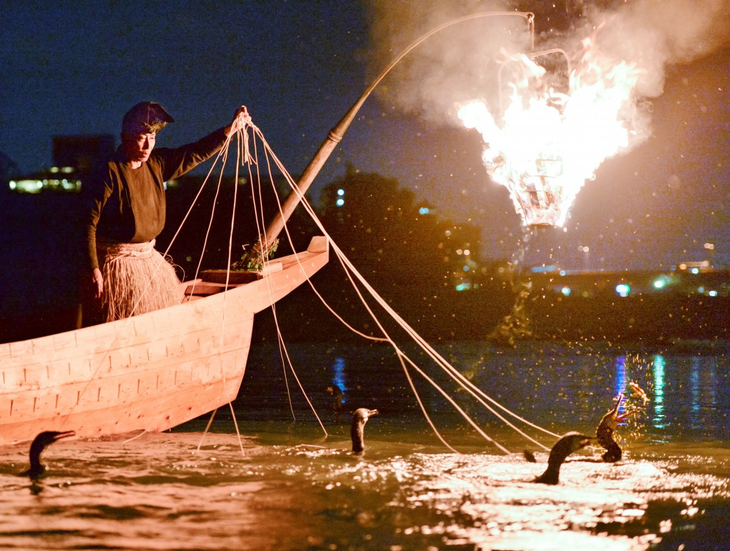 Cormorants skillfully catching sweet fish in fire-lit river (in Gifu-shi)