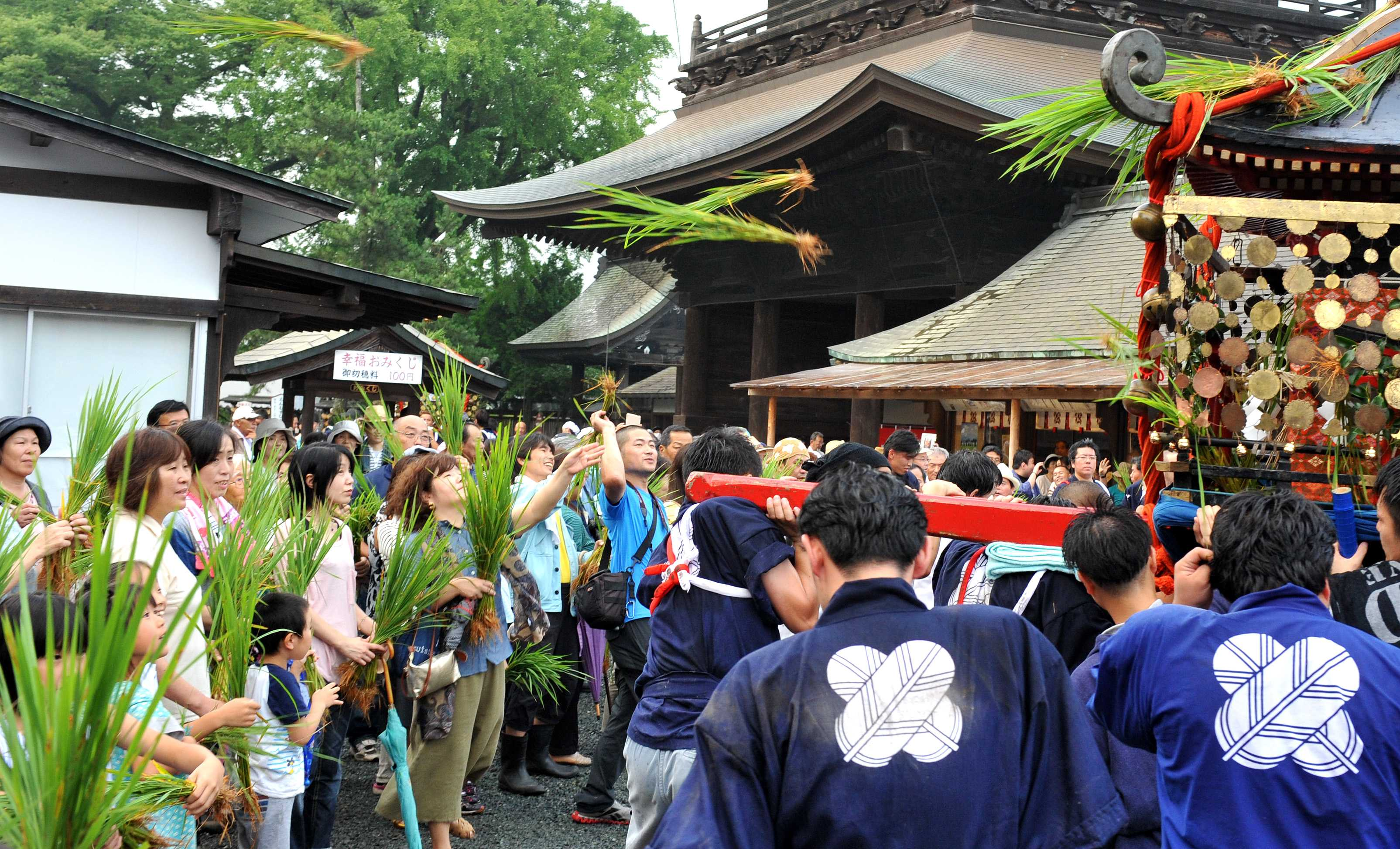 Attendants tossing rice stalks onto mikoshi. The more stalks stay on roofs, the better the harvest will be, according to tradition