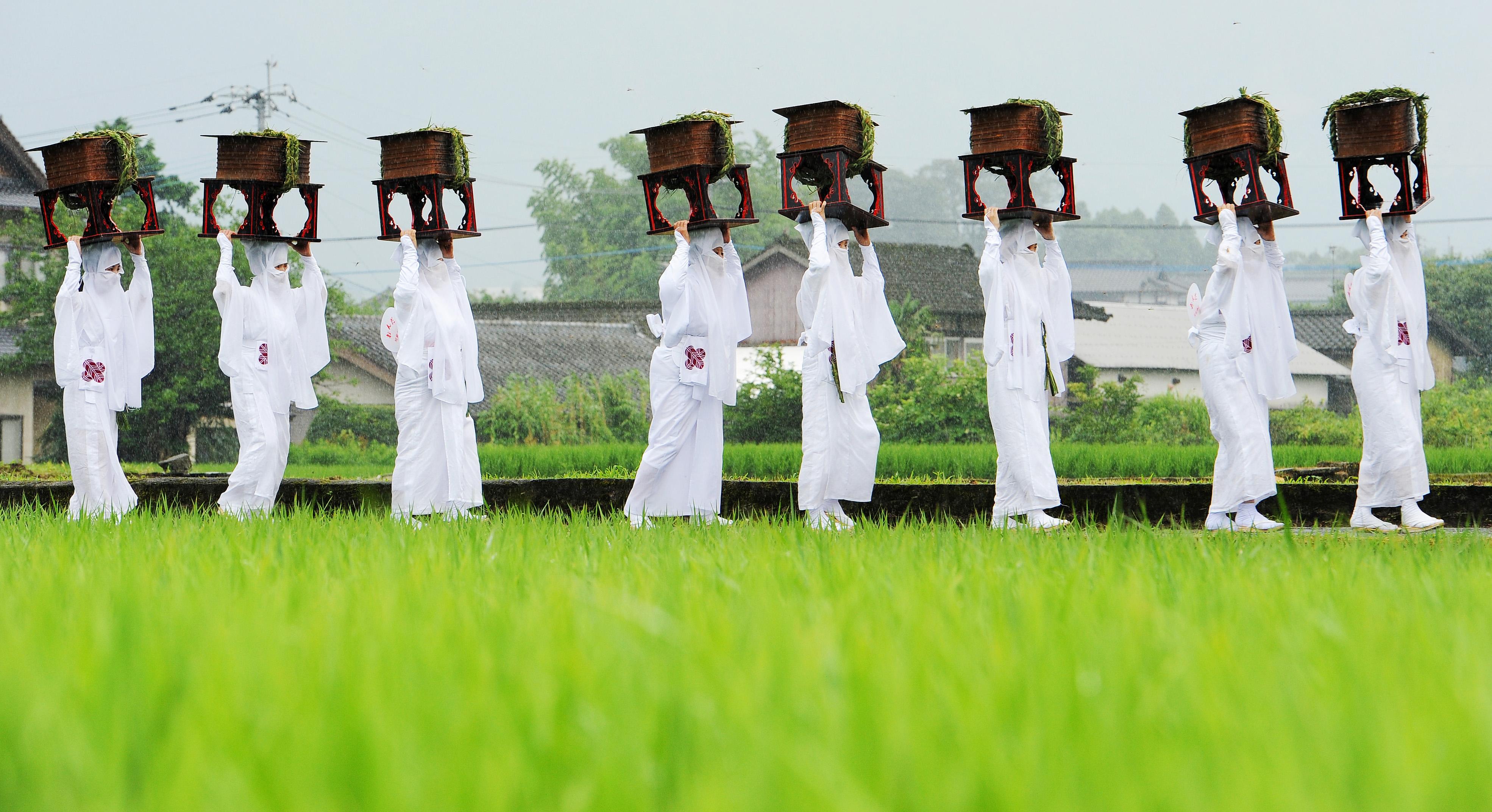 Unari walking along path between rice paddies (in Aso-shi, Kumamoto Prefecture)