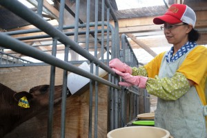 A worker at JA Karatsu Cattle Station in Karatsu, Saga Prefecture, feeds a calf. Calf raising facilities are hit by a sharp increase in skim milk powder prices